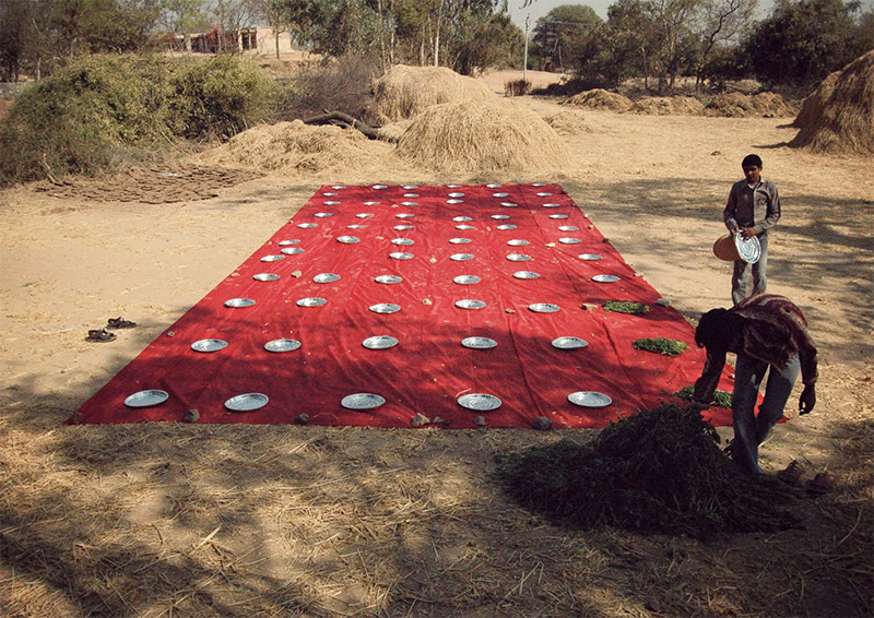 Jamanvar (wedding lunch) for the cows | Performance | 2008