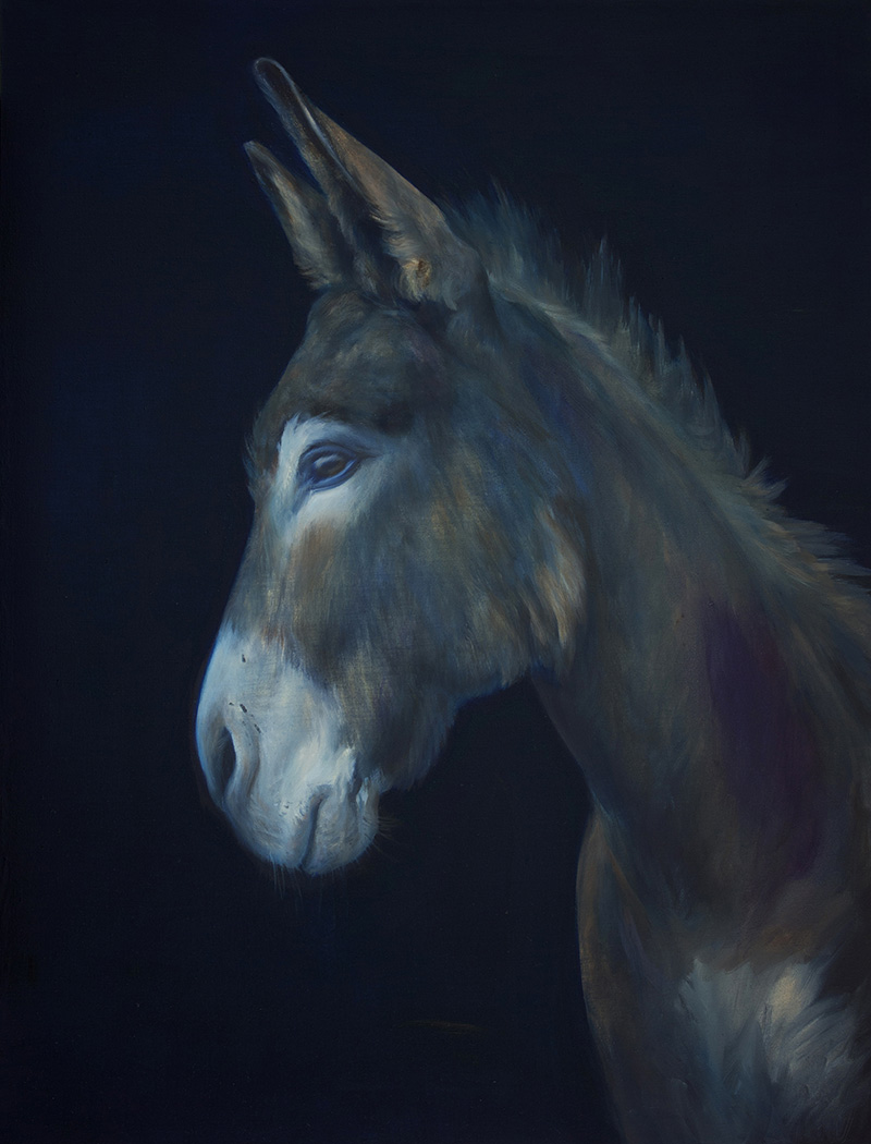 The blue donkey | 80 X 60 cm | 2013